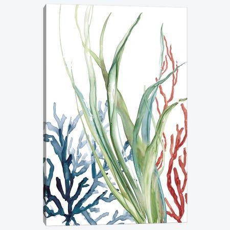 Ocean Garden II Canvas Print #CRO805} by Carol Robinson Canvas Artwork