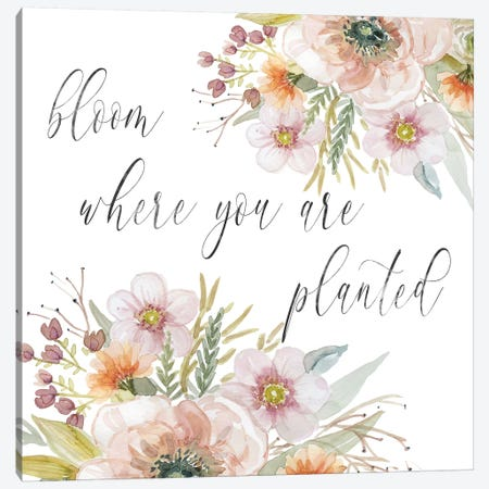 Peach Bloom I Canvas Print #CRO808} by Carol Robinson Canvas Art Print