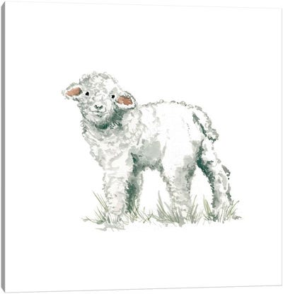 Lamb Canvas Print #CRO82