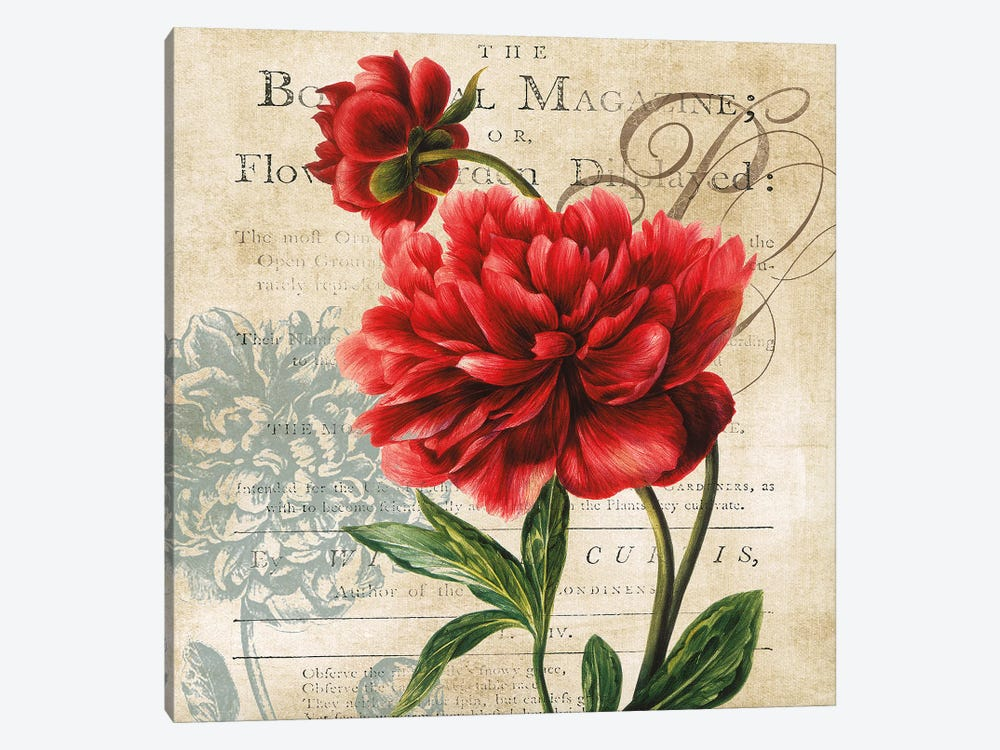 The Botanical Magazine by Carol Robinson 1-piece Canvas Art