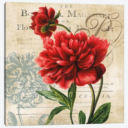 The Botanical Magazine Canvas Print #CRO848} by Carol Robinson Canvas Art Print