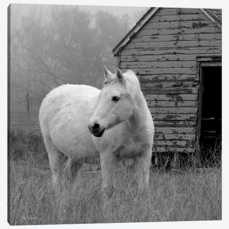 Morning Pasture Canvas Print #CRO85} by Carol Robinson Canvas Print