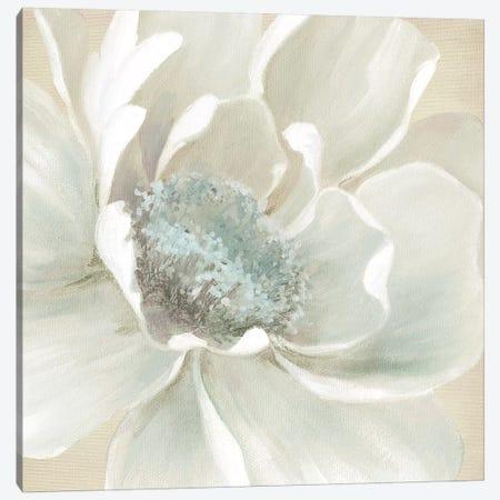Winter Blooms I Canvas Print #CRO864} by Carol Robinson Canvas Wall Art