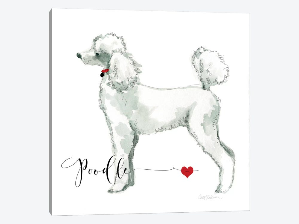 Must Love Poodles by Carol Robinson 1-piece Canvas Artwork