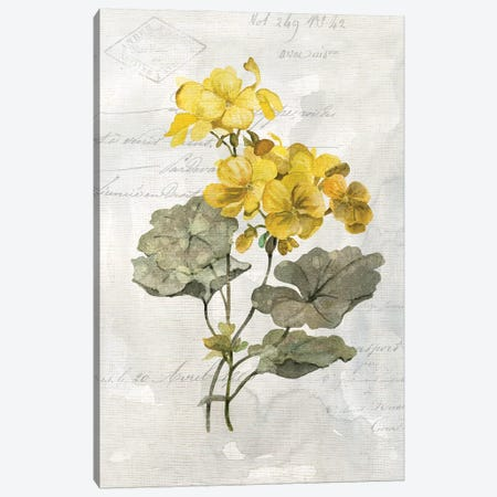 Canary Linen Geranium Canvas Print #CRO918} by Carol Robinson Art Print