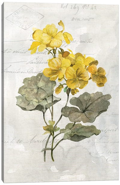 Canary Linen Geranium Canvas Art Print