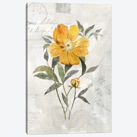 Canary Linen Peony Canvas Print #CRO919} by Carol Robinson Canvas Art Print