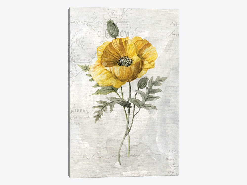 Canary Linen Poppy by Carol Robinson 1-piece Canvas Print