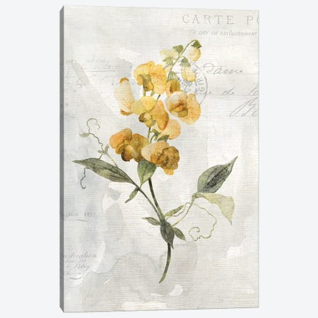 Canary Linen Sweetpea Canvas Print #CRO921} by Carol Robinson Canvas Artwork