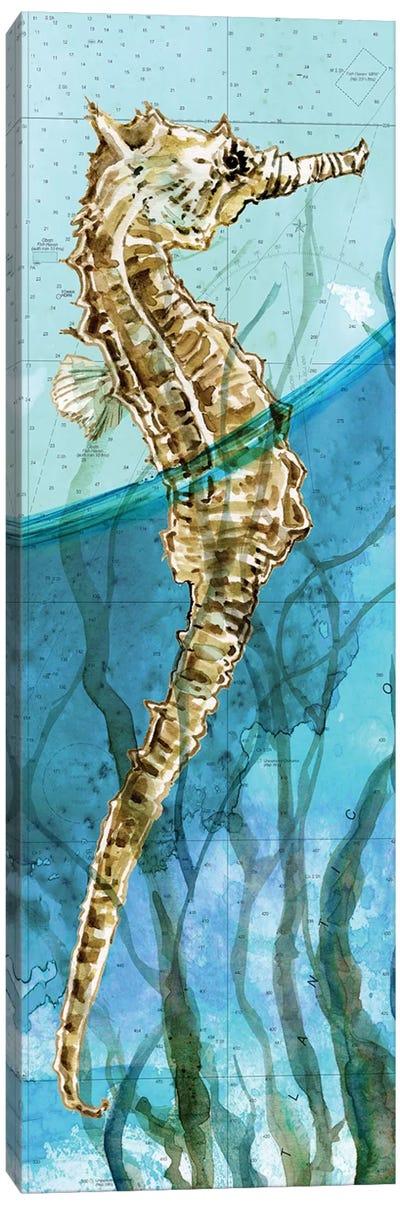 Atlantic Seahorse Canvas Art Print