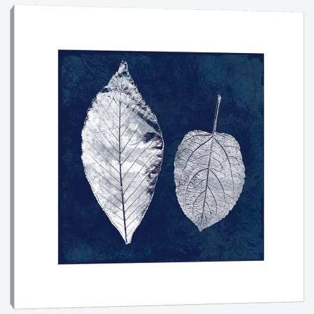 Cyanotype Ash Leaves Canvas Print #CRO96} by Carol Robinson Canvas Wall Art