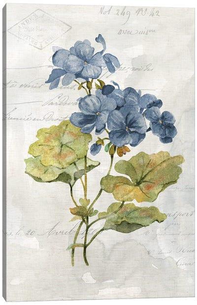 Blue Linen Geranium Canvas Art Print