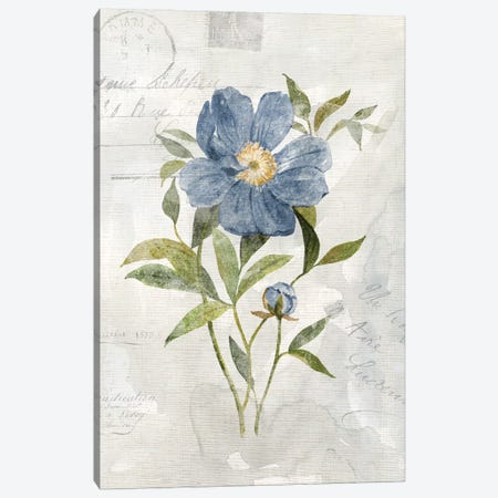 Blue Linen Peony Canvas Print #CRO976} by Carol Robinson Canvas Wall Art