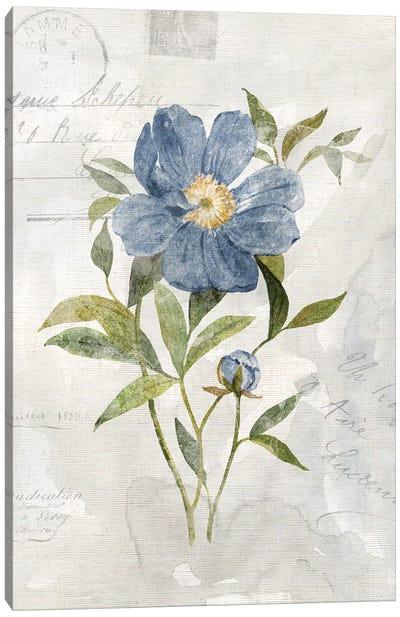Blue Linen Peony Canvas Art Print