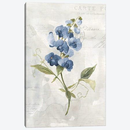 Blue Linen Sweet Pea Canvas Print #CRO978} by Carol Robinson Art Print