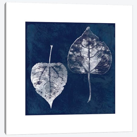 Cyanotype Aspen Leaves Canvas Print #CRO97} by Carol Robinson Canvas Artwork