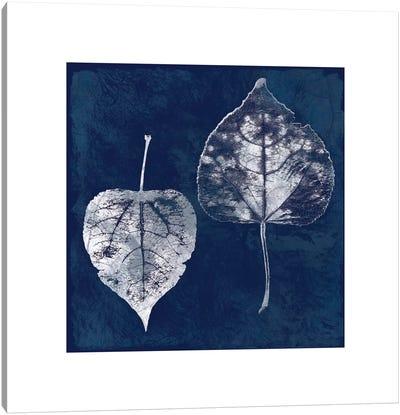 Cyanotype Aspen Leaves Canvas Art Print