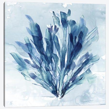 Coastal Coral I Canvas Print #CRO980} by Carol Robinson Canvas Artwork
