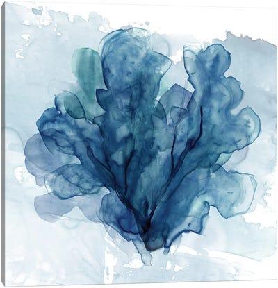 Coastal Coral II Canvas Art Print