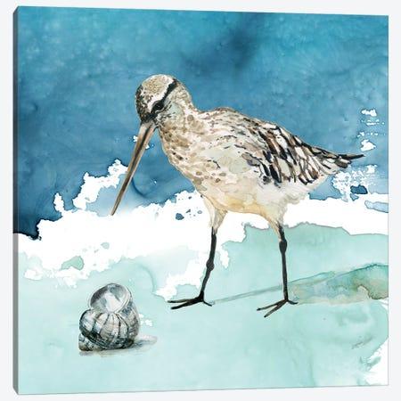 Delray Sandpiper II Canvas Print #CRO992} by Carol Robinson Art Print