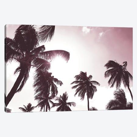 Palm Sunshine Canvas Print #CRP108} by Natalie Carpentieri Art Print