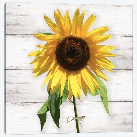 Farmhouse Sunflower Canvas Print #CRP135} by Natalie Carpentieri Art Print
