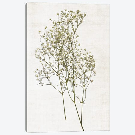 Farmhouse Pressed Flower I Canvas Print #CRP160} by Natalie Carpentieri Canvas Print