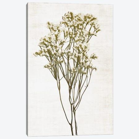 Farmhouse Pressed Flower II Canvas Print #CRP161} by Natalie Carpentieri Art Print