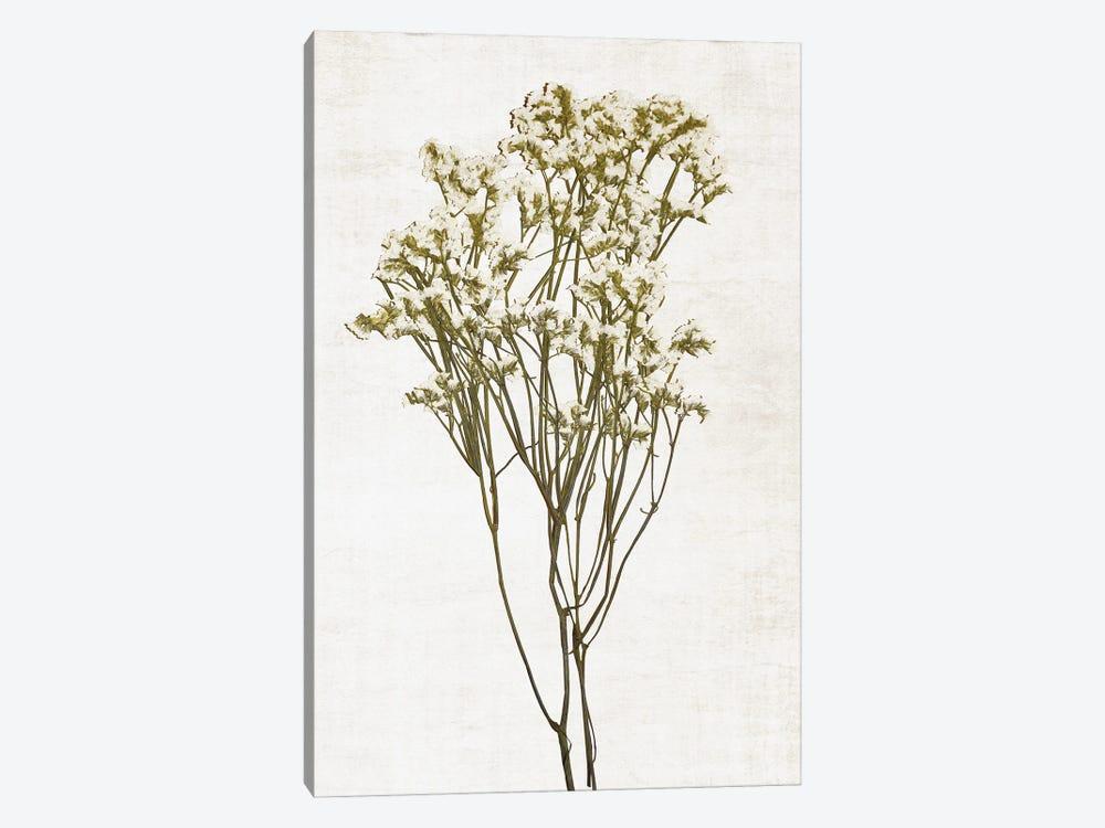Farmhouse Pressed Flower II by Natalie Carpentieri 1-piece Canvas Art