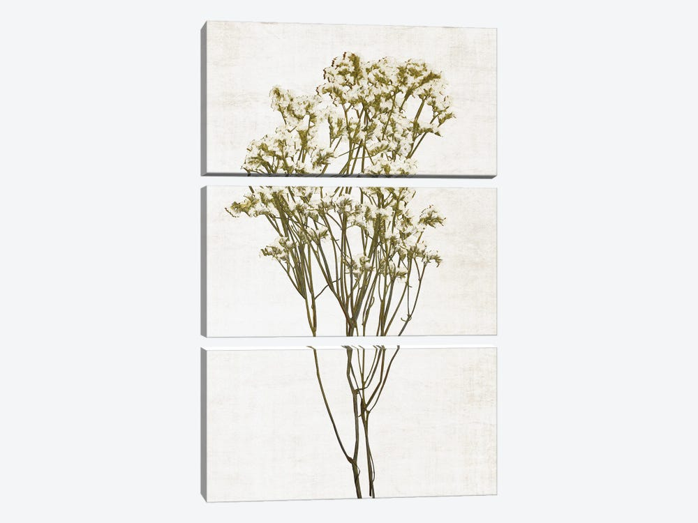 Farmhouse Pressed Flower II by Natalie Carpentieri 3-piece Canvas Art