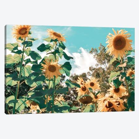 Sunflower Field Canvas Print #CRP192} by Natalie Carpentieri Canvas Artwork