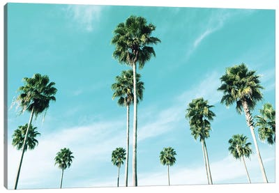 East Coast Palms Canvas Art Print