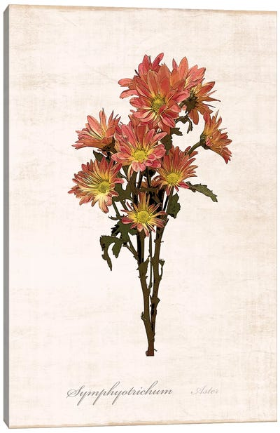 Sketchbook Aster Canvas Art Print