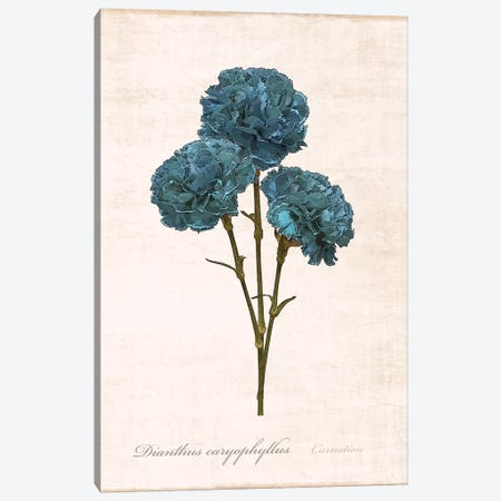 Sketchbook Carnation Canvas Print #CRP26} by Natalie Carpentieri Canvas Wall Art