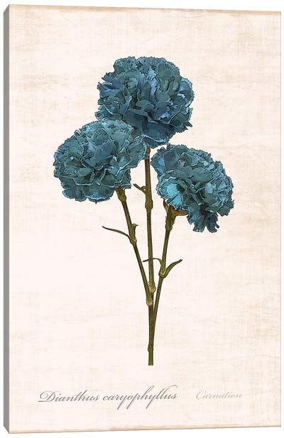 Sketchbook Carnation Canvas Art Print