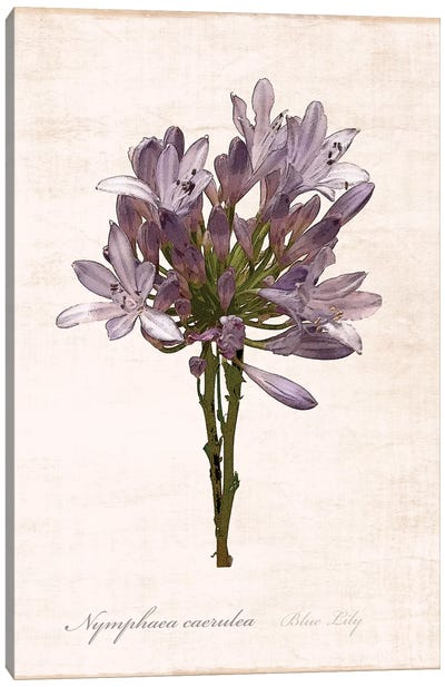 Sketchbook Lily Canvas Art Print