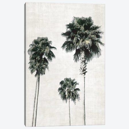 Sketchbook Palm Canvas Print #CRP29} by Natalie Carpentieri Canvas Art Print