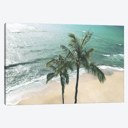 Maui Palm Canvas Print #CRP37} by Natalie Carpentieri Art Print