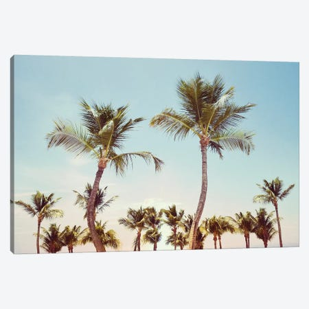 Aruba Palm Canvas Print #CRP38} by Natalie Carpentieri Canvas Art
