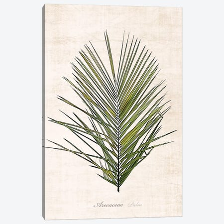 Palm Botanical I Canvas Print #CRP50} by Natalie Carpentieri Canvas Art