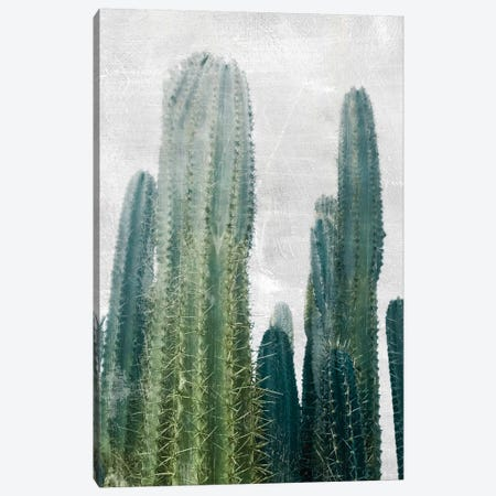 Aruba Cacti I Canvas Print #CRP65} by Natalie Carpentieri Canvas Art