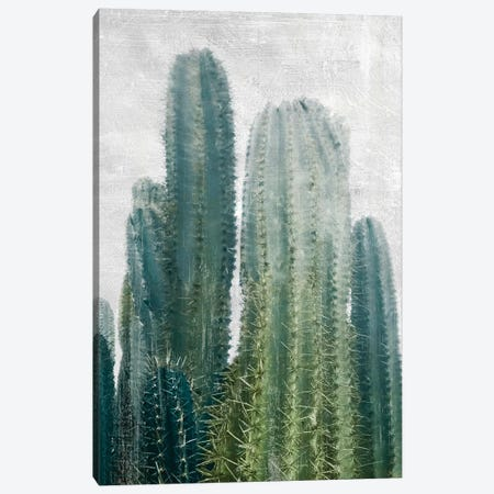 Aruba Cacti II Canvas Print #CRP66} by Natalie Carpentieri Canvas Art