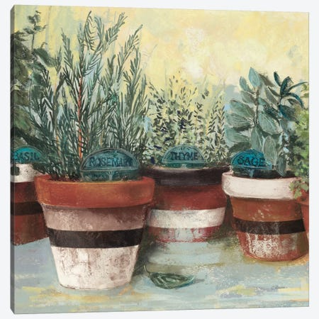 Potted Herbs II Stripes Crop Canvas Print #CRW18} by Carol Rowan Canvas Print