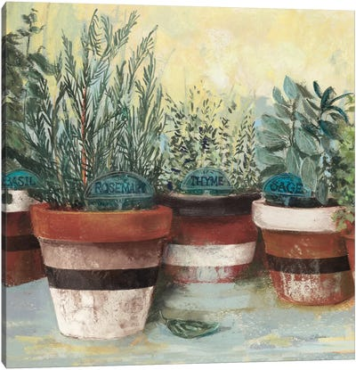 Potted Herbs II Stripes Crop Canvas Art Print