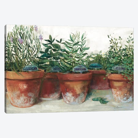 Pots of Herbs I White Canvas Print #CRW20} by Carol Rowan Canvas Artwork