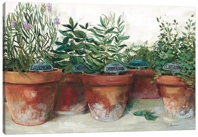 Pots of Herbs I White Canvas Art Print