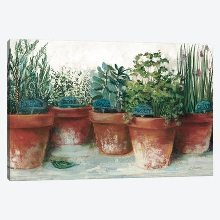 Pots of Herbs II White Canvas Print #CRW21} by Carol Rowan Canvas Wall Art