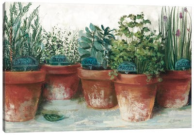 Pots of Herbs II White Canvas Art Print