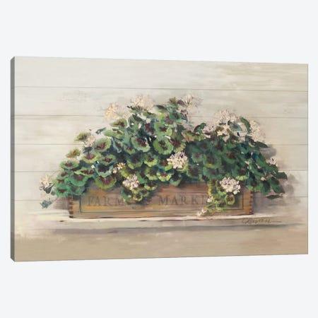 Farmers Market Geraniums Canvas Print #CRW2} by Carol Rowan Canvas Print