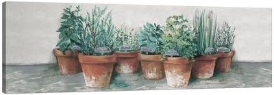 Pots of Herbs II Cottage v2 Canvas Art Print